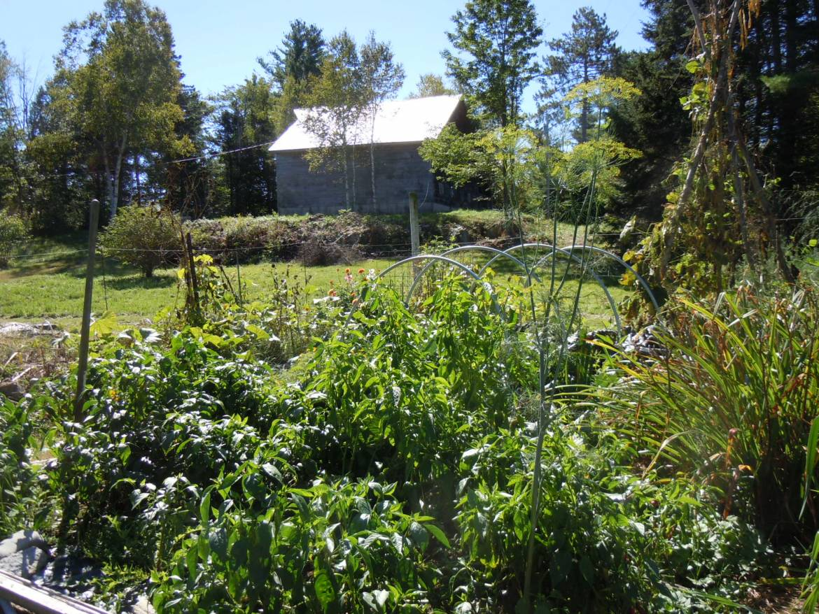 34_-Barn-from-Vegetable-Garden.jpg
