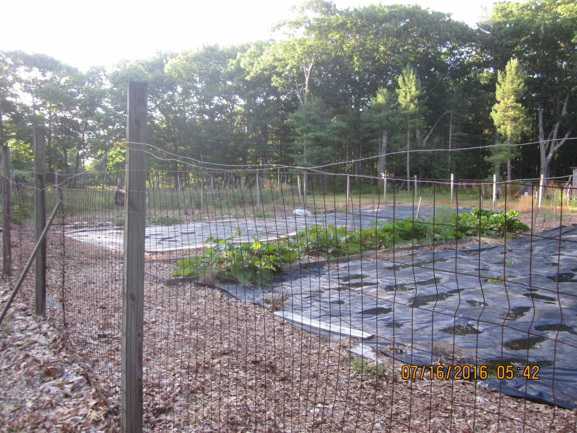 Another-view-of-the-prepared-garden-plots..jpg