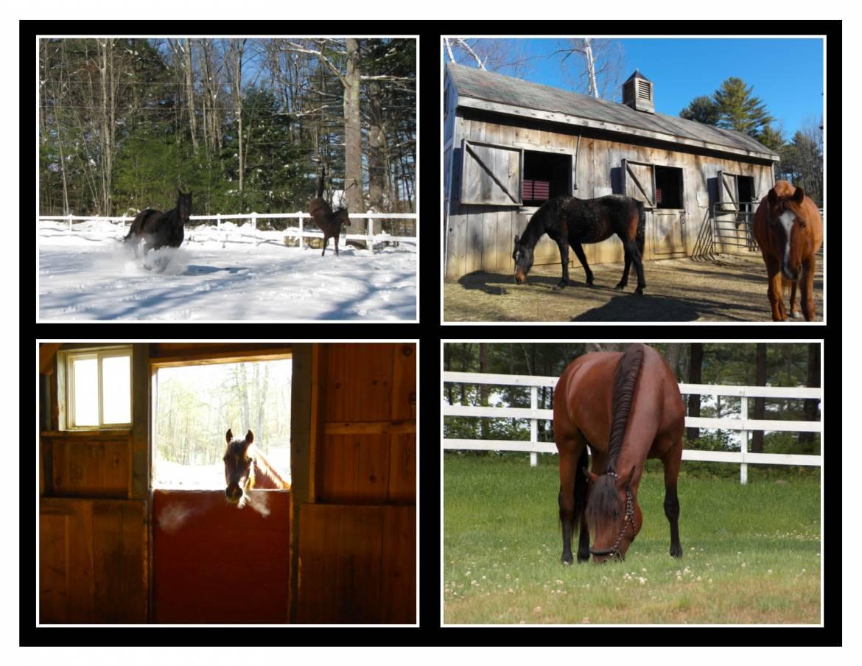 Multi-Photo-Horses.jpg