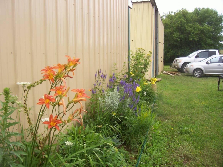 Perennial-Flowers-2015-4-1.jpg