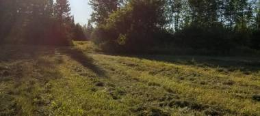 bright sun shot in treesfield