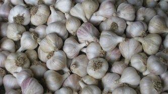 Garlic-on-Drying-Rack.jpg