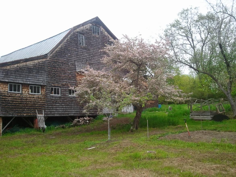 barn-looking-toward-garden-1.jpg