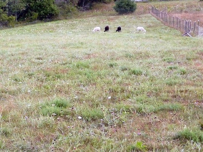 North-pasture.jpg