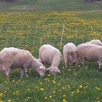 sheep-dandy.jpg