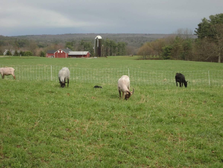 Oakfields-Farm-1-e1588268477176.jpg