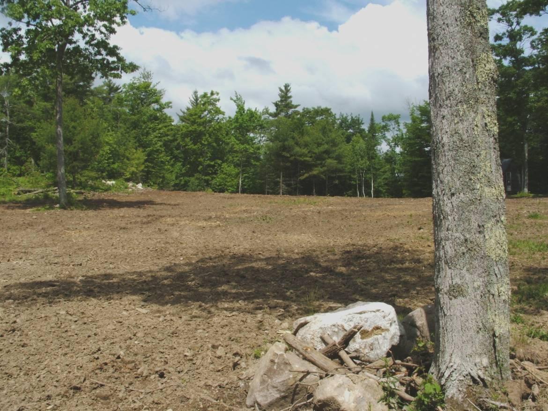 Field-II.jpg