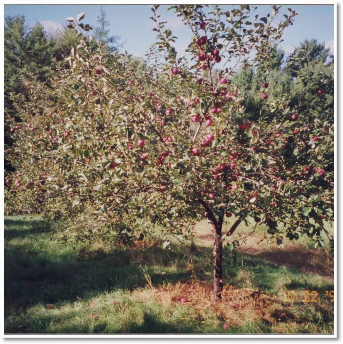 apples-in-abundance-scaled.jpg