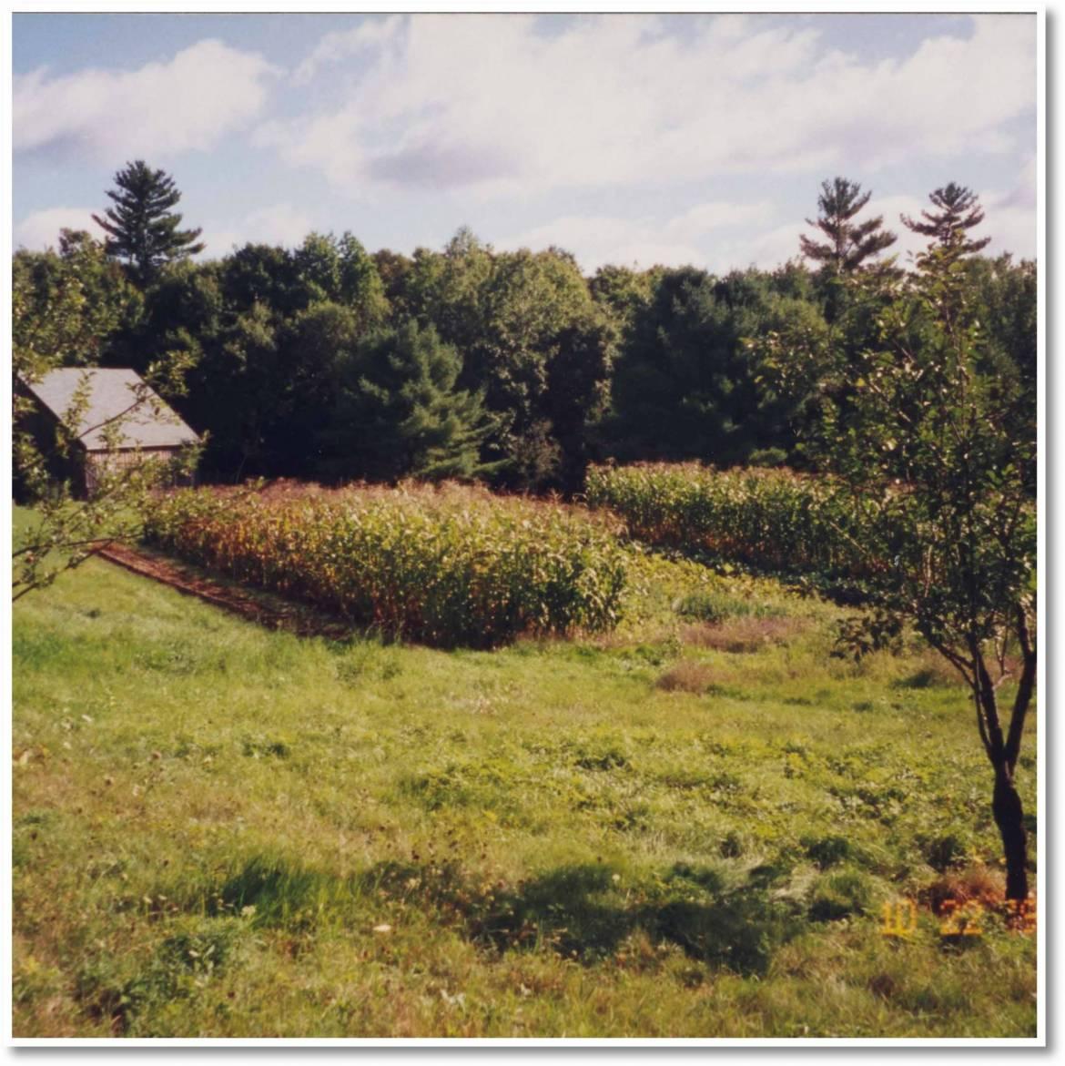 corn-crop-scaled.jpg