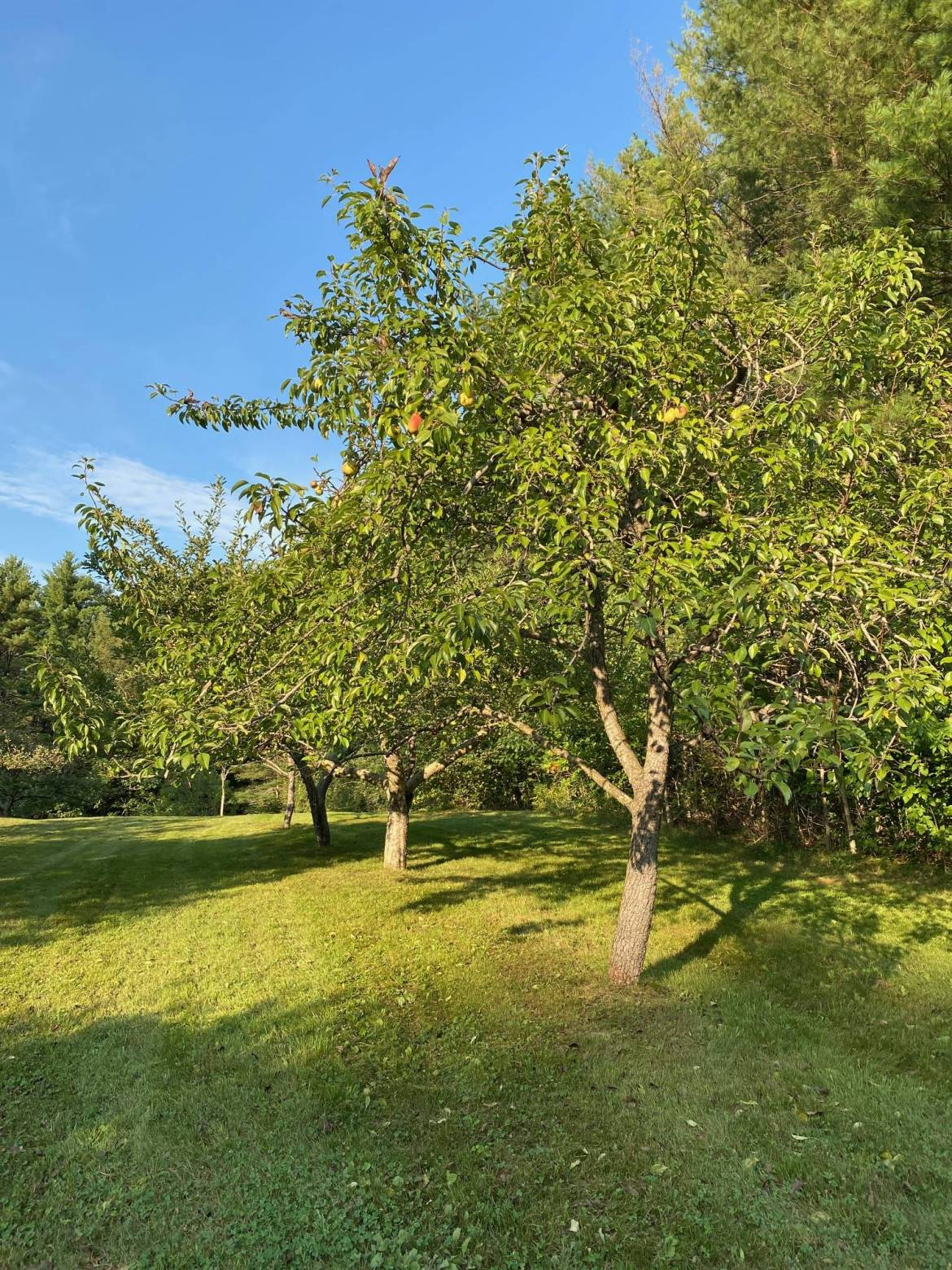 front-orchard-1-rotated.jpg
