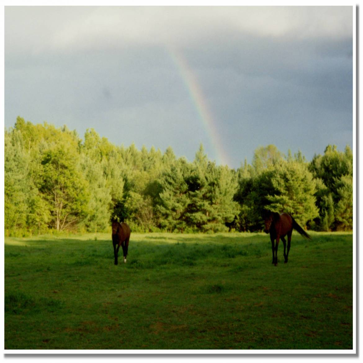 horses-in-the-pasture-1-scaled.jpg